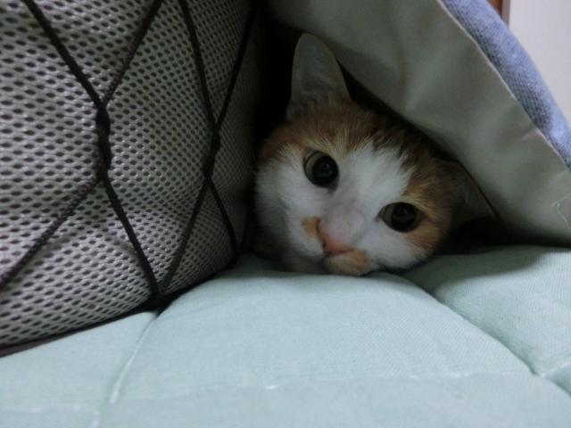 人見知りな猫