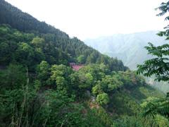 秩父の山と大陽寺