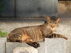 護国寺にいた日向ぼっこ中のネコ