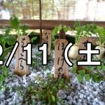 城南宮の七草粥コン(京都)