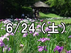 明治神宮花菖蒲コン(東京)
