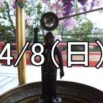 上野・谷中花まつり散策コン(東京)